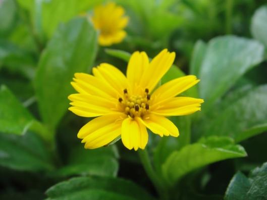 flower https://katahatimutiara.wordpress.com