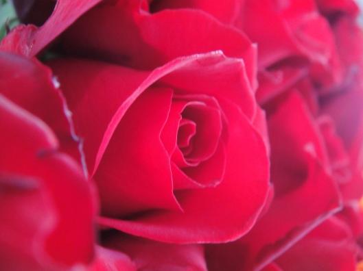 flower rose https://katahatimutiara.wordpress.com