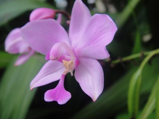 orchid https://katahatimutiara.wordpress.com